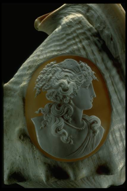 Close-up photograph of a cameo carved into a conch shell (NMNH G1752) from the National Gem Collection