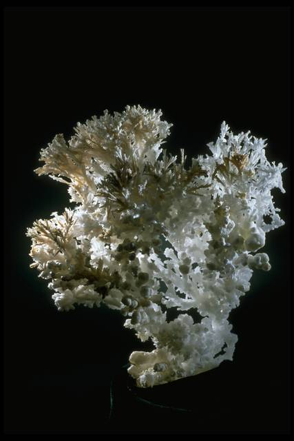 Photograph of aragonite (NMNH R12457) from the National Mineral Collection