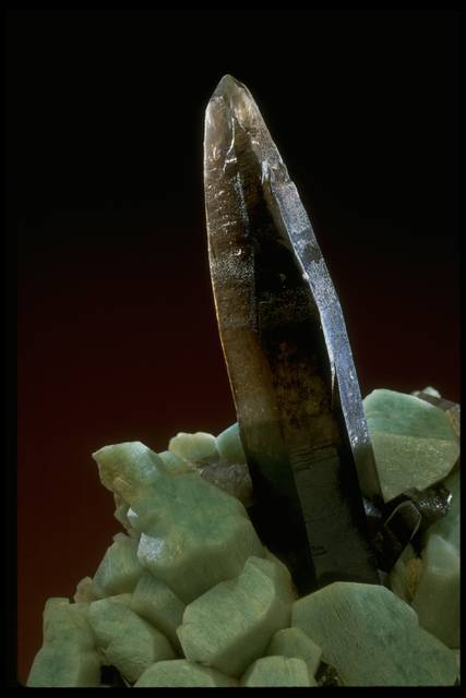 Close-up photograph of a smoky quartz crystal on microcline (86555) from the National Mineral Collection
