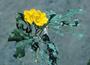 Boraginaceae - Cordia lutea