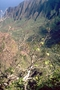 Malvaceae - Hibiscadelphus woodii