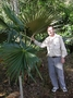 Arecaceae - Pritchardia minor