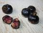 Rubiaceae - Bobea elatior