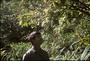 Amaranthaceae - Nototrichium sandwicense