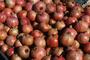 Lythraceae - Punica granatum