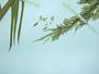 Poaceae - Holcus lanatus