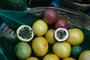 Passifloraceae - Passiflora edulis