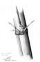 Poaceae - Bambusa vulgaris var. vittata