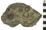 Image of Sedimentary Rock Fossiliferous Limestone