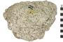 Image of Igneous Rock Granite