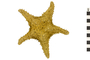 Image of Red Cushion Sea Star