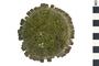 Image of Shingle Urchin