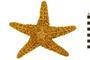 Image of Ochre Star