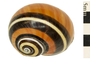 Image of Painted Snail
