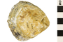 Image of European Flat Oyster
