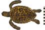 Image of Atlantic Hawksbill Sea Turtle
