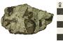 Image of Trilobite