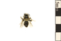 Image of Mining Bee