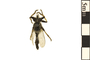 Image of Robber Fly