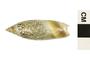 Image of Olive Snail