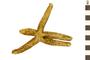 Image of Sea Star