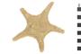 Image of Arctic Cushion Star