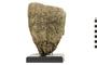 Image of Vase Sponge