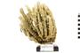 Image of Branching Vase Sponge