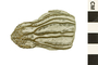 Image of Crinoid