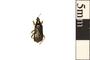 Image of Damsel Bug