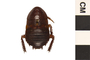 Image of Florida Cockroach