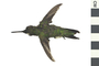 Image of Ruby-throated Hummingbird