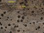 Bacidia albidolivens image
