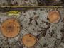 Coenogonium fallaciosum image