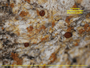 Gyalolechia xanthostigmoidea image
