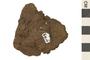 Image of Igneous Rock Scoria