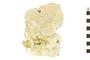 Image of Orange Elephant Ear Sponge