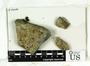 Placopsis parellina image