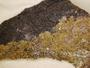 Acarospora novomexicana image