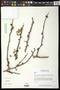 Bursera fagaroides (Kunth) Engl.