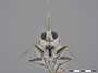 Albibarbefferia albibarbis Macquart, 1838