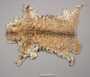 Tawny Cat Pelt