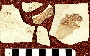 Plioplarchus sexspinosus Cope