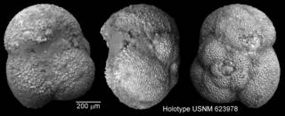 To NMNH Paleobiology Collection (IRN 3147906)