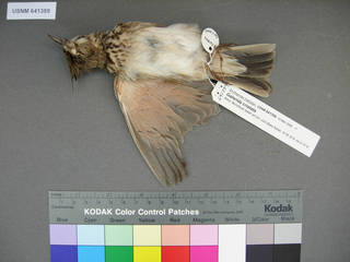 To NMNH Extant Collection (USNM 641359 ventral)