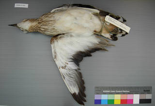 To NMNH Extant Collection (USNM 641366 ventral)