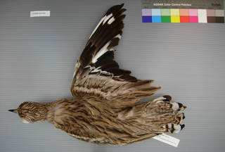 To NMNH Extant Collection (USNM 641366 dorsal)