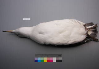 To NMNH Extant Collection (USNM 643575 Ventral)