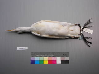 To NMNH Extant Collection (USNM 643577 Ventral)