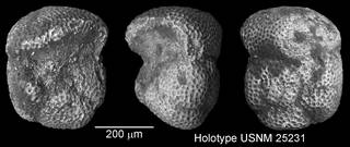 To NMNH Paleobiology Collection (IRN 3142547)